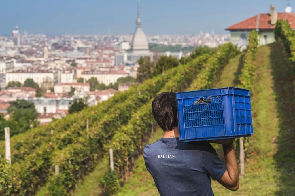 vigne-urbane-i-vigneti-che-non-ti-aspetti-in-città