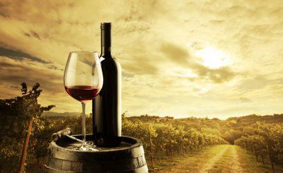 nasci il vino del palatino progetto di eno-archeologia nel Parco Archeologico del Colosseo