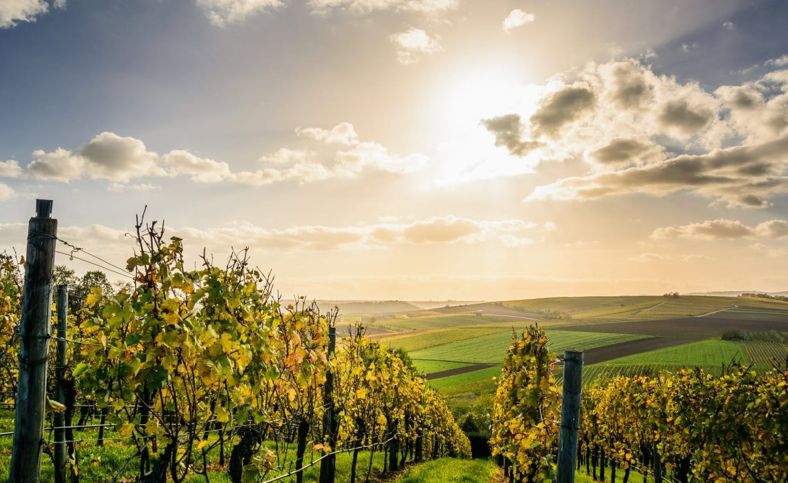 Piemonte tra le 7 Best Wine Travel Experiences 2020